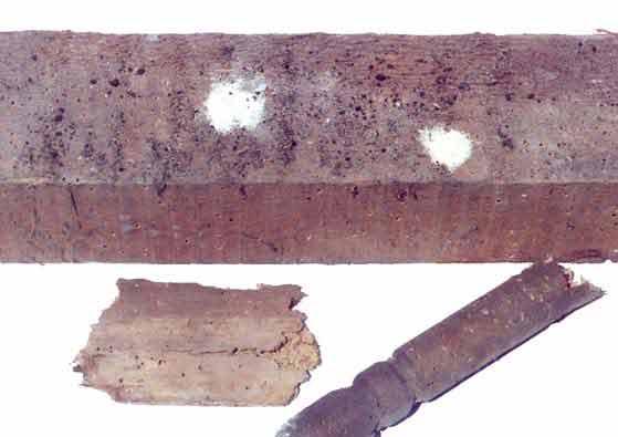 Verschiedene Holzteile die durch den Holzwurm (Gewöhnlichen Nagekäfer) geschädigt wurden