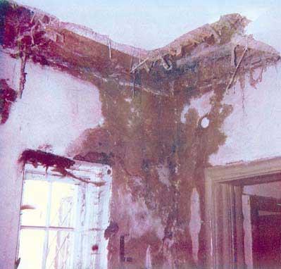 Hausschwamm durch verstopfte Dachentwässerung