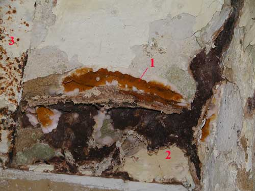 New and old fruit-bodies from the dry rot as well as need-fruit-bodies