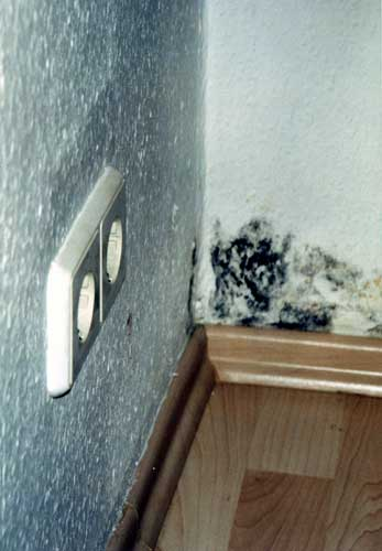 Mould in the corner of the room