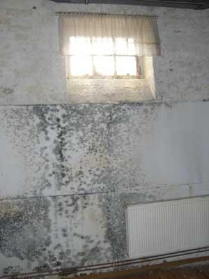 Verschimmelte Gipsbauplatte als Wandverkleidung